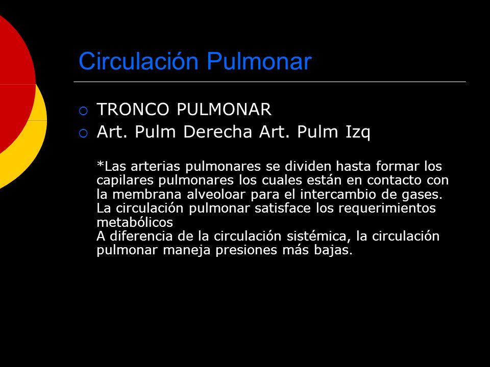 Circulación Pulmonar TRONCO PULMONAR Art. Pulm Derecha Art. Pulm Izq *Las arterias pulmonares se dividen hasta formar los capilares pulmonares los cua