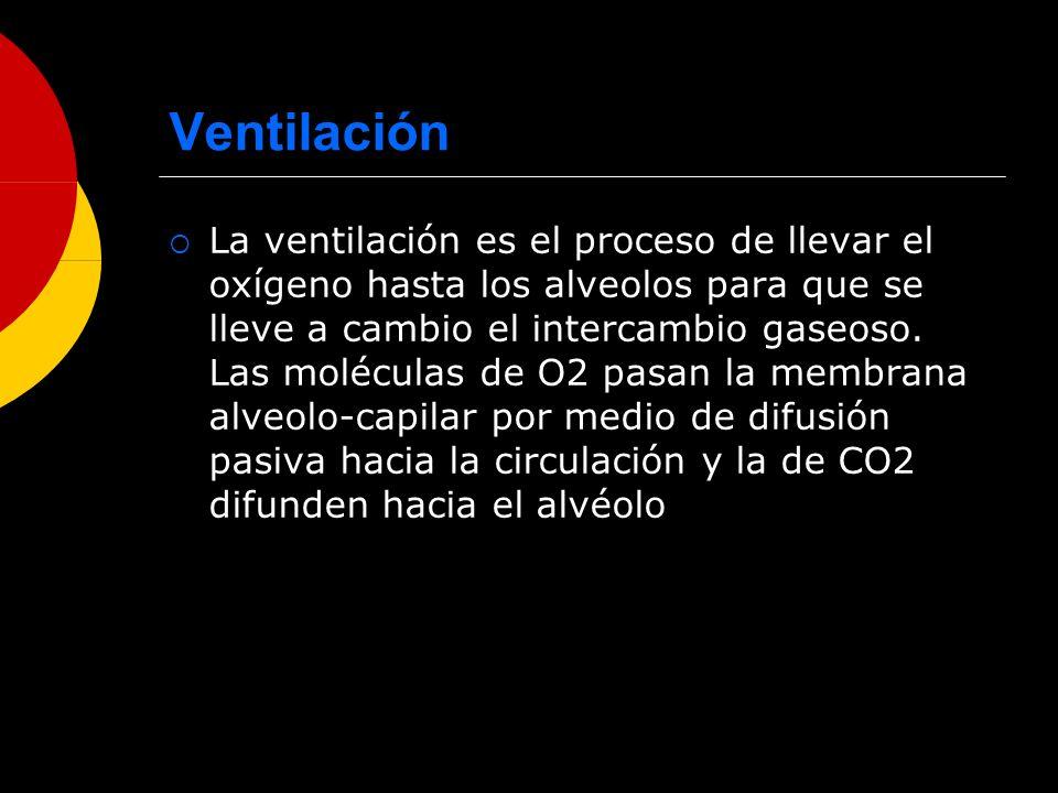 Ventilación La ventilación es el proceso de llevar el oxígeno hasta los alveolos para que se lleve a cambio el intercambio gaseoso. Las moléculas de O