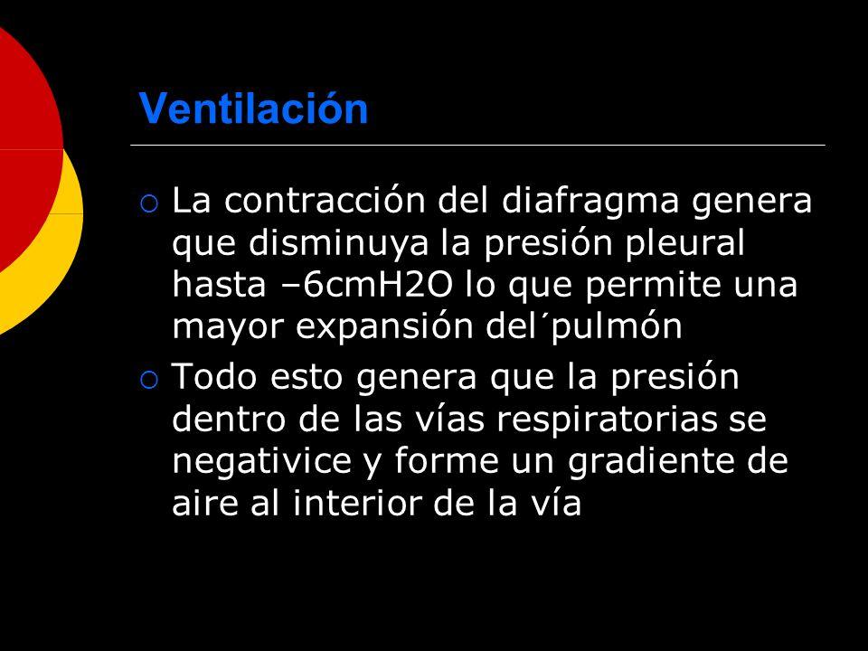 Ventilación La contracción del diafragma genera que disminuya la presión pleural hasta –6cmH2O lo que permite una mayor expansión del´pulmón Todo esto