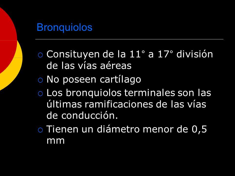 Bronquiolos Consituyen de la 11° a 17° división de las vías aéreas No poseen cartílago Los bronquiolos terminales son las últimas ramificaciones de la