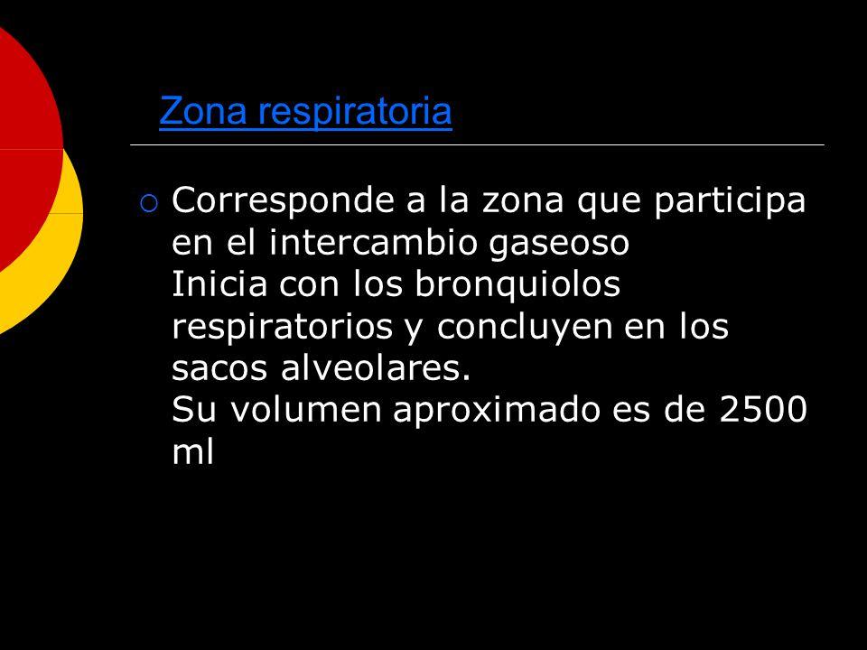 Zona respiratoria Corresponde a la zona que participa en el intercambio gaseoso Inicia con los bronquiolos respiratorios y concluyen en los sacos alve