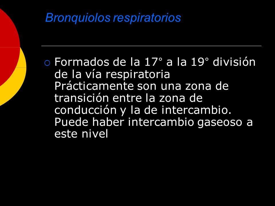 PRESIONES INTRATORÁCICAS Presión de retracción Es causada por la capacidad de retracción de los pulmones.