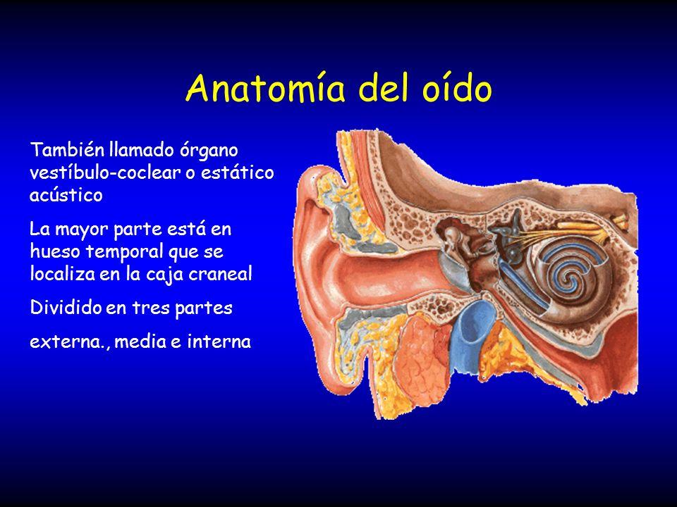 Anatomía del oído También llamado órgano vestíbulo-coclear o estático acústico La mayor parte está en hueso temporal que se localiza en la caja cranea
