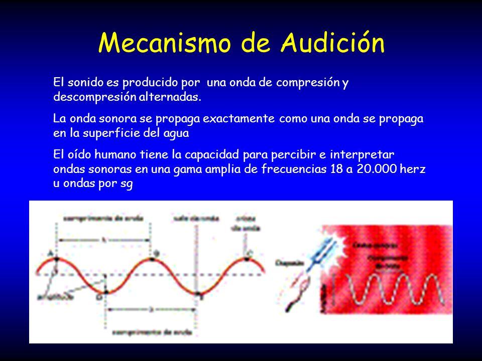 Mecanismo de Audición El sonido es producido por una onda de compresión y descompresión alternadas. La onda sonora se propaga exactamente como una ond