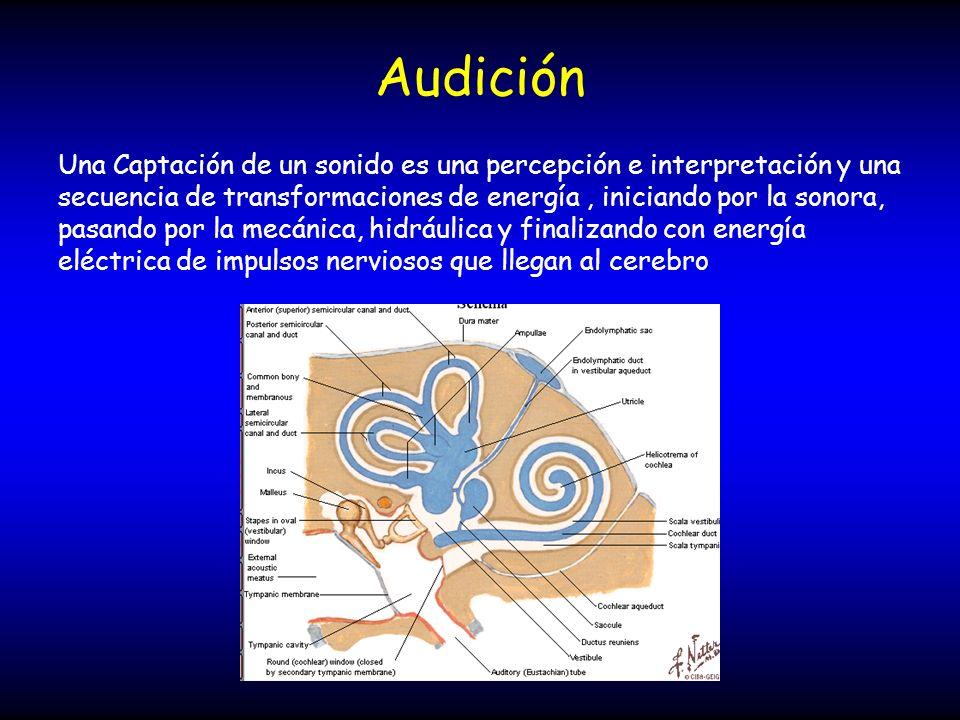 Audición Una Captación de un sonido es una percepción e interpretación y una secuencia de transformaciones de energía, iniciando por la sonora, pasand