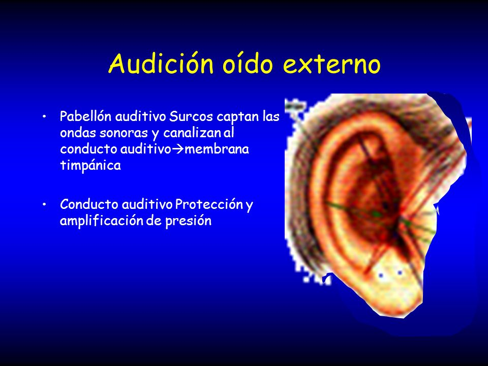Audición oído externo Pabellón auditivo Surcos captan las ondas sonoras y canalizan al conducto auditivo membrana timpánica Conducto auditivo Protecci