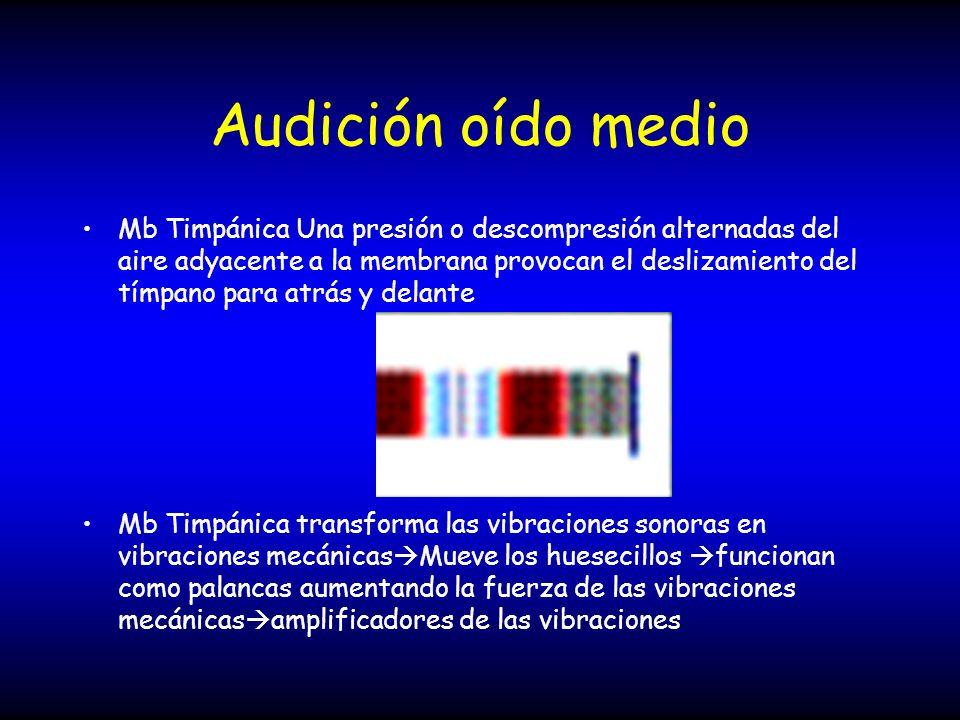 Audición oído medio Mb Timpánica Una presión o descompresión alternadas del aire adyacente a la membrana provocan el deslizamiento del tímpano para at