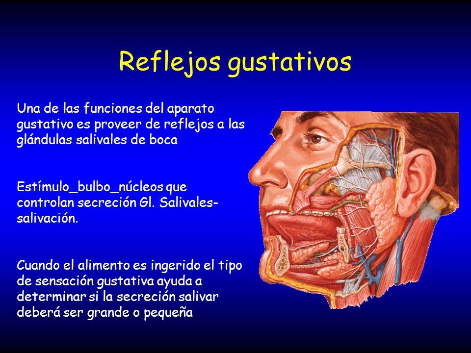 Reflejos gustativos Una de las funciones del aparato gustativo es proveer de reflejos a las glándulas salivales de boca Estímulo_bulbo_núcleos que con