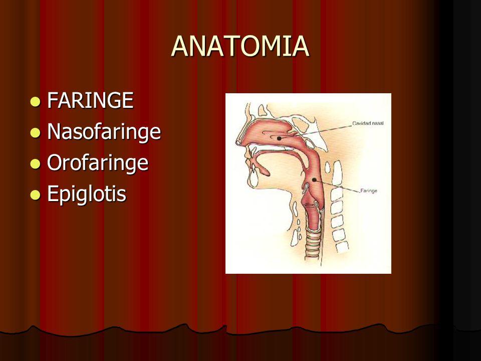 ANATOMIA FARINGE FARINGE Nasofaringe Nasofaringe Orofaringe Orofaringe Epiglotis Epiglotis