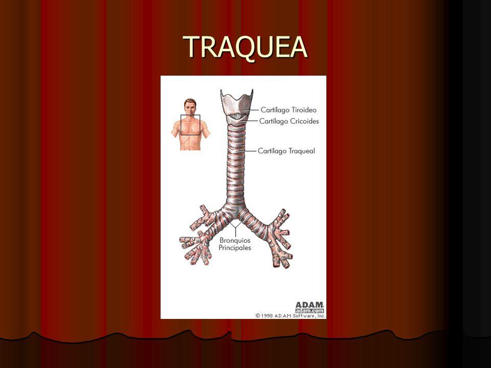 EVALUACION A) historia A) historia Artritis Artritis Infeccion Infeccion Tumores Tumores Obesidad morbida Obesidad morbida Traumatismos Traumatismos Quemaduras, cirugias, oradiacion Quemaduras, cirugias, oradiacion acromegalia acromegalia