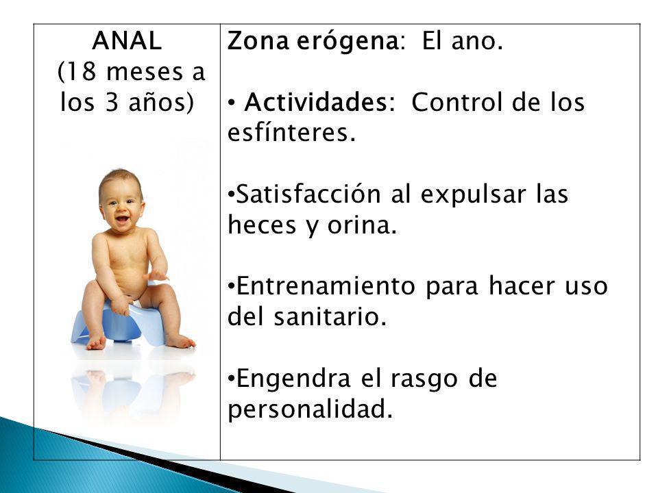 ANAL (18 meses a los 3 años) Zona erógena: El ano.