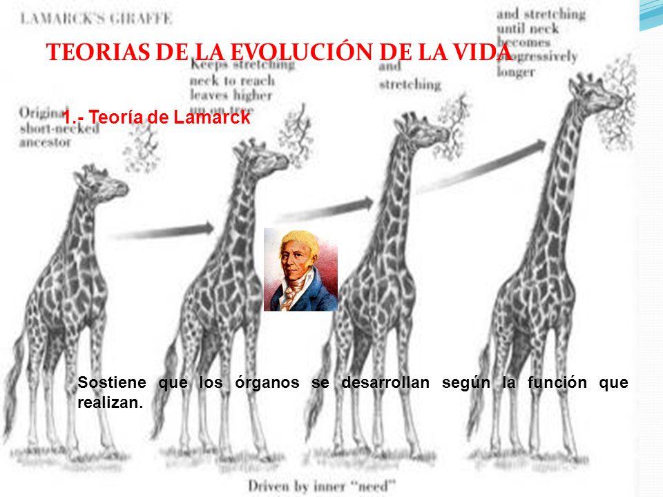 Teoria de Evolucion Quimica Teoría Evolución Química