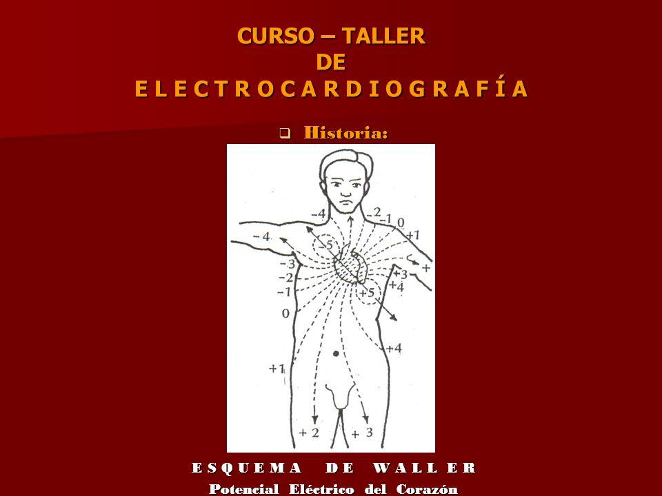 CURSO – TALLER DE E L E C T R O C A R D I O G R A F Í A V e c t o r e s V e c t o r e s