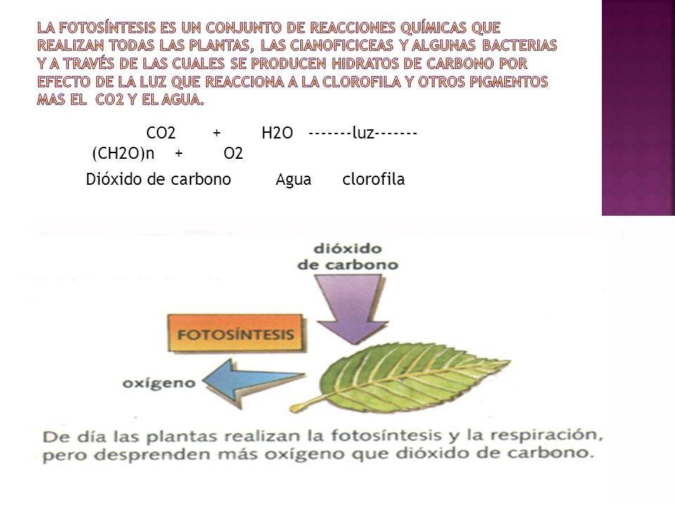 CO2 + H2O -------luz------- (CH2O)n + O2 Dióxido de carbono Agua clorofila