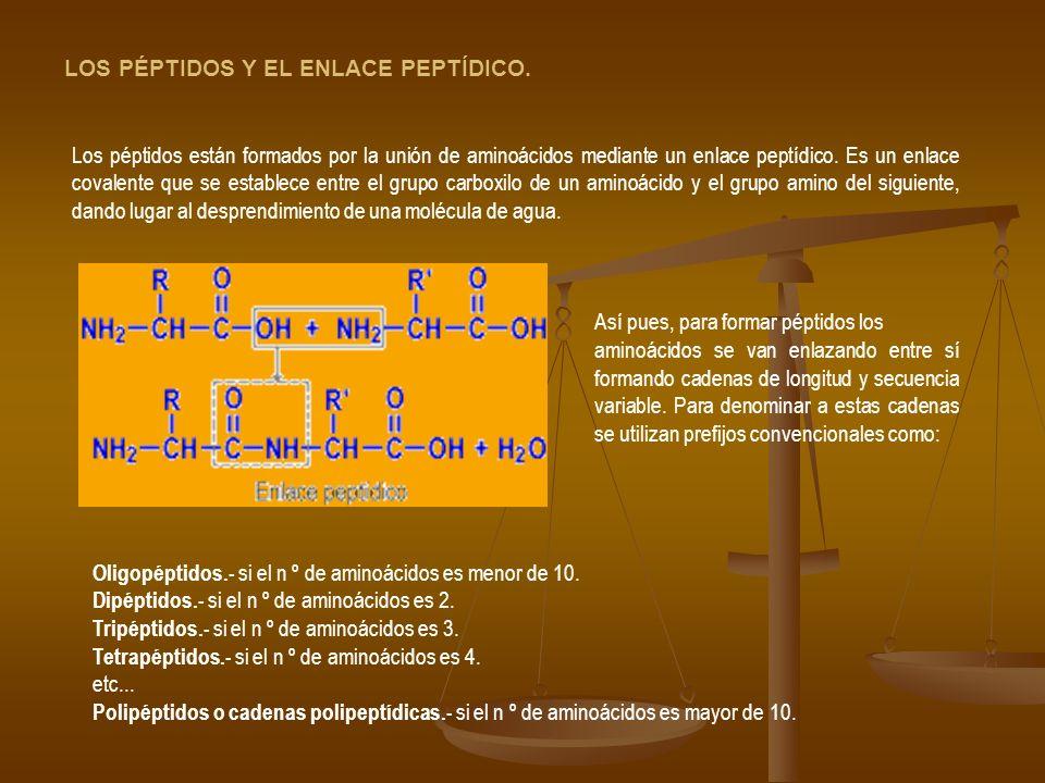 Los péptidos están formados por la unión de aminoácidos mediante un enlace peptídico. Es un enlace covalente que se establece entre el grupo carboxilo