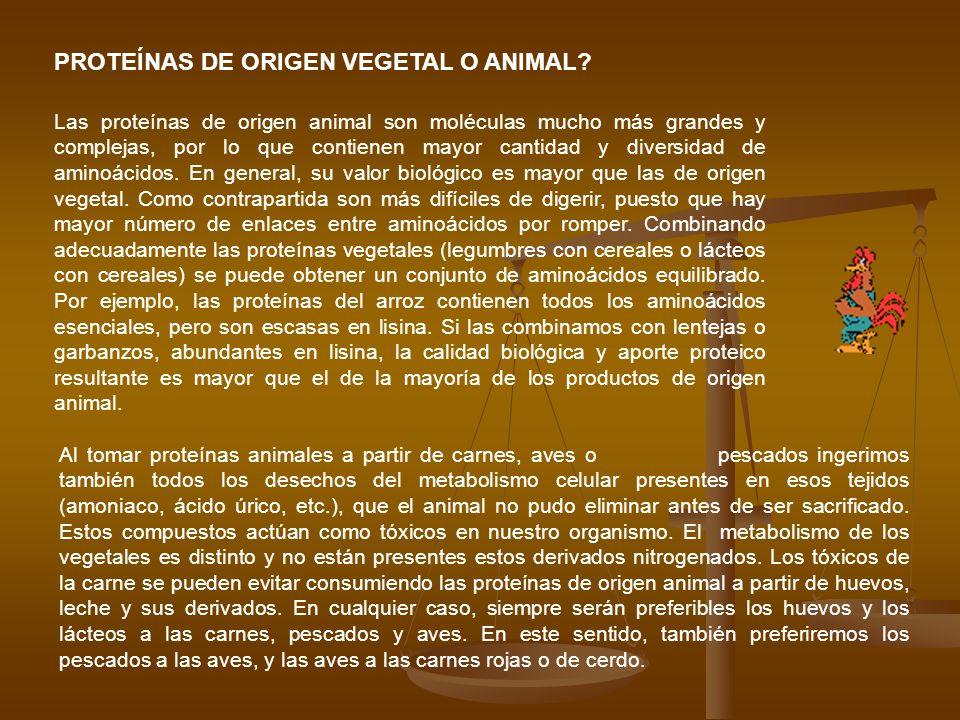 PROTEÍNAS DE ORIGEN VEGETAL O ANIMAL? Las proteínas de origen animal son moléculas mucho más grandes y complejas, por lo que contienen mayor cantidad