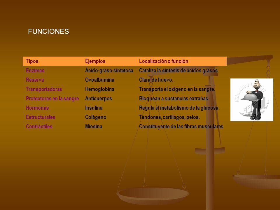 FUNCIONES TiposEjemplosLocalización o función EnzimasÁcido-graso-sintetosaCataliza la síntesis de ácidos grasos. ReservaOvoalbúminaClara de huevo. Tra