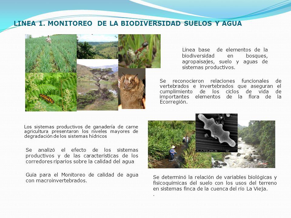 LINEA 1. MONITOREO DE LA BIODIVERSIDAD SUELOS Y AGUA Se reconocieron relaciones funcionales de vertebrados e invertebrados que aseguran el cumplimient