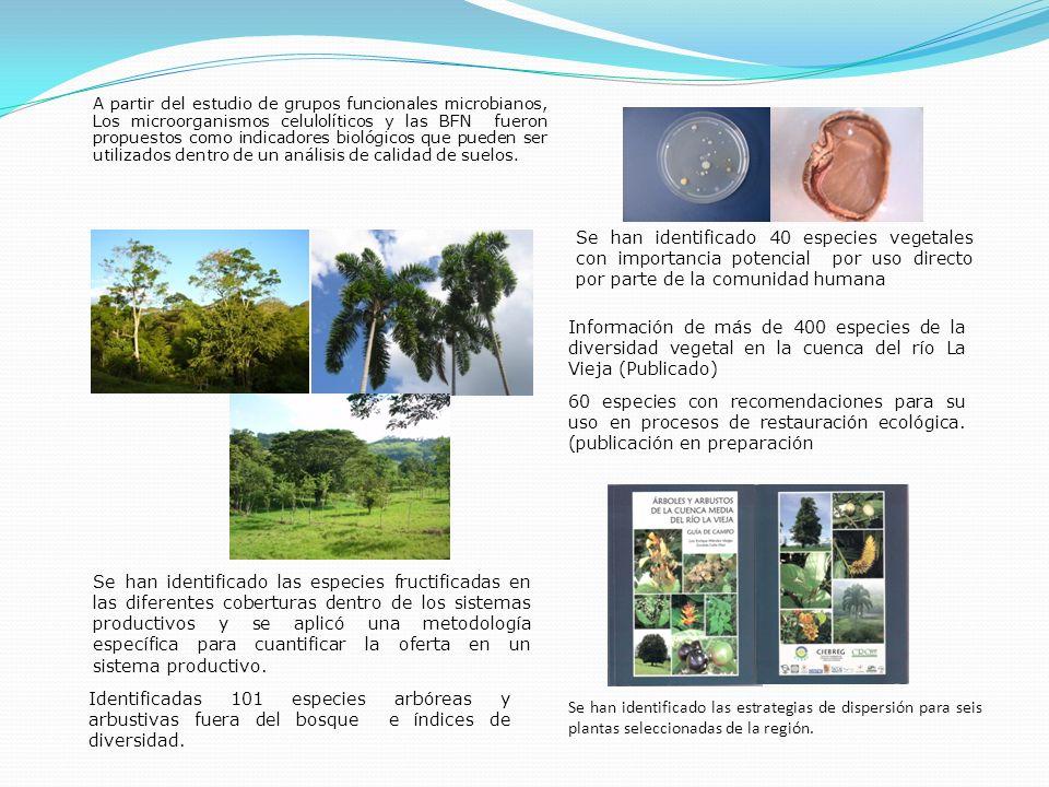 Se han identificado 40 especies vegetales con importancia potencial por uso directo por parte de la comunidad humana Identificadas 101 especies arbóre