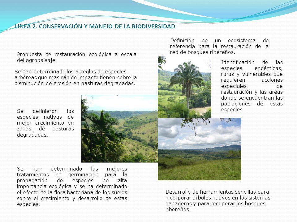 LINEA 2. CONSERVACIÓN Y MANEJO DE LA BIODIVERSIDAD Definición de un ecosistema de referencia para la restauración de la red de bosques ribereños. Prop