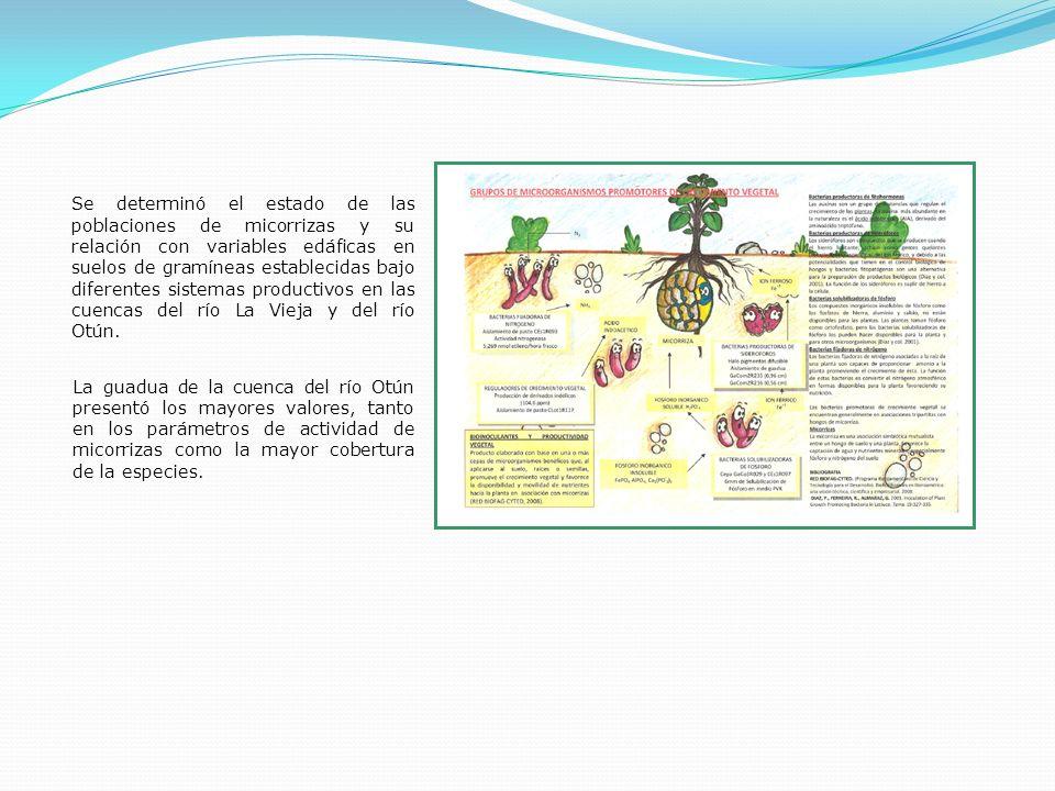 Se determinó el estado de las poblaciones de micorrizas y su relación con variables edáficas en suelos de gramíneas establecidas bajo diferentes siste