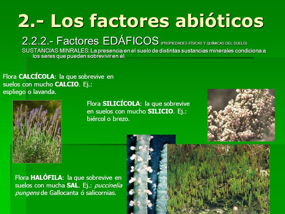 2.2.2.- Factores EDÁFICOS (PROPIEDADES FÍSICAS Y QUÍMICAS DEL SUELO) SUSTANCIAS MINRALES: La presencia en el suelo de distintas sustancias minerales c