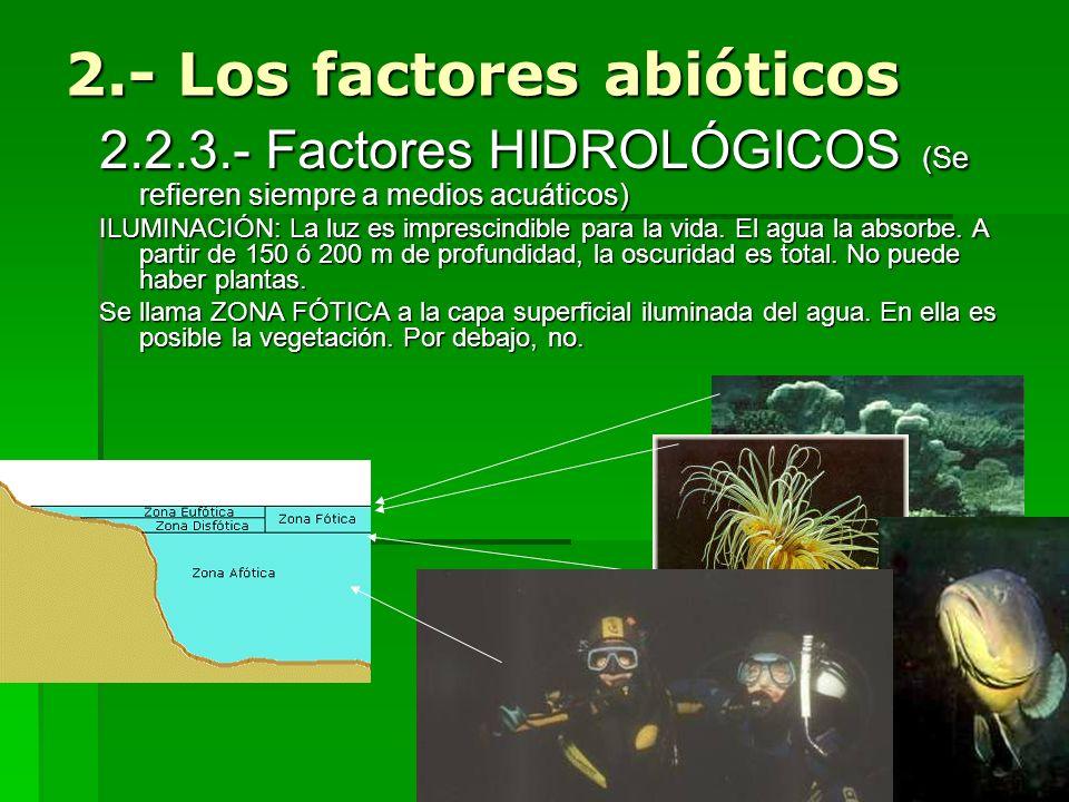 2.- Los factores abióticos 2.2.3.- Factores HIDROLÓGICOS (Se refieren siempre a medios acuáticos) ILUMINACIÓN: La luz es imprescindible para la vida.
