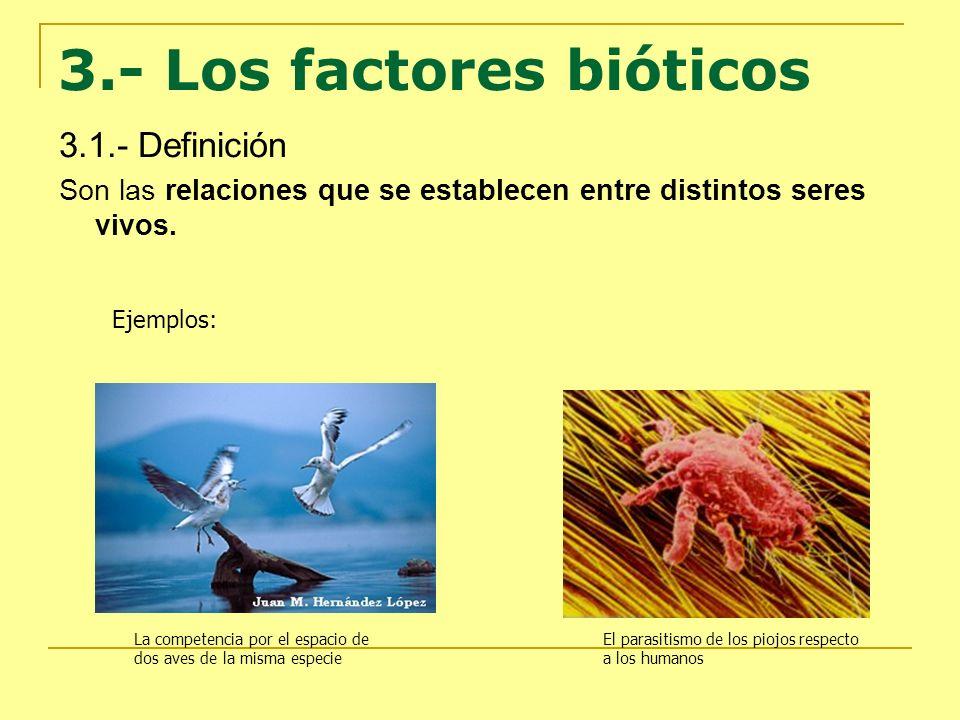 3.- Los factores bióticos 3.1.- Definición Son las relaciones que se establecen entre distintos seres vivos. Ejemplos: La competencia por el espacio d
