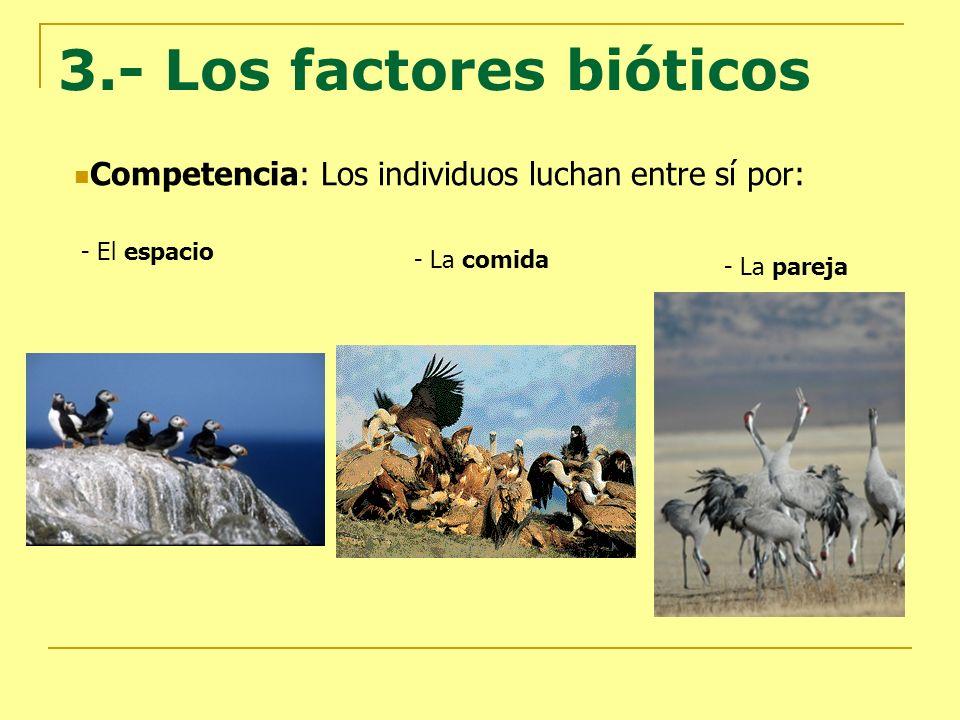 3.- Los factores bióticos Competencia: Los individuos luchan entre sí por: - El espacio - La comida - La pareja