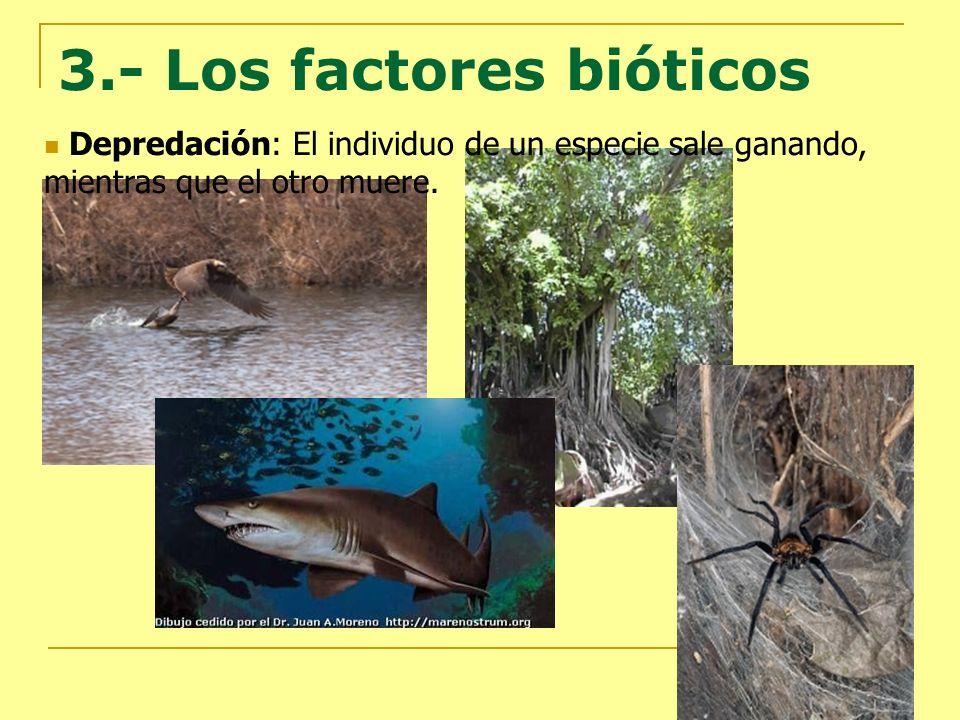 3.- Los factores bióticos Depredación: El individuo de un especie sale ganando, mientras que el otro muere.
