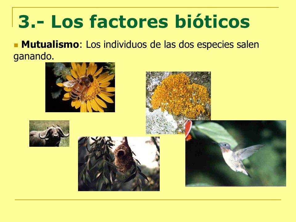 3.- Los factores bióticos Mutualismo: Los individuos de las dos especies salen ganando.