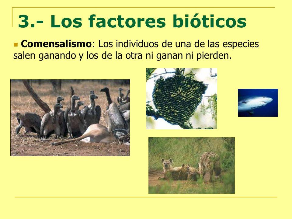 3.- Los factores bióticos Comensalismo: Los individuos de una de las especies salen ganando y los de la otra ni ganan ni pierden.