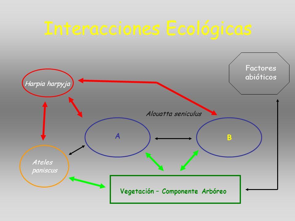 Interacciones Ecológicas Alouatta seniculus A B Vegetación – Componente Arbóreo Harpia harpyja Factores abióticos Ateles paniscus