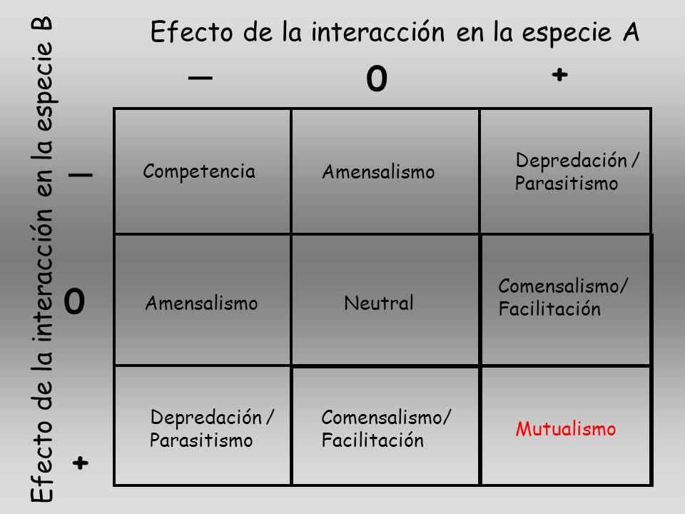 _ _ 0 + + 0 Efecto de la interacción en la especie A Efecto de la interacción en la especie B Competencia Amensalismo Depredación / Parasitismo Amensa