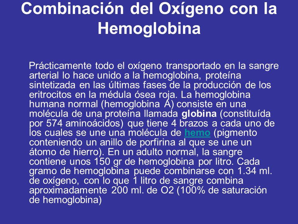 Combinación del Oxígeno con la Hemoglobina Prácticamente todo el oxígeno transportado en la sangre arterial lo hace unido a la hemoglobina, proteína sintetizada en las últimas fases de la producción de los eritrocitos en la médula ósea roja.