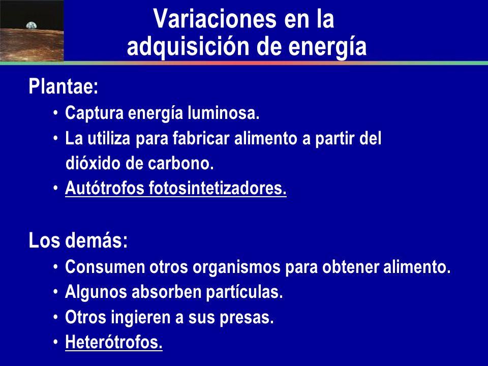 Variaciones en la adquisición de energía Plantae: Captura energía luminosa. La utiliza para fabricar alimento a partir del dióxido de carbono. Autótro