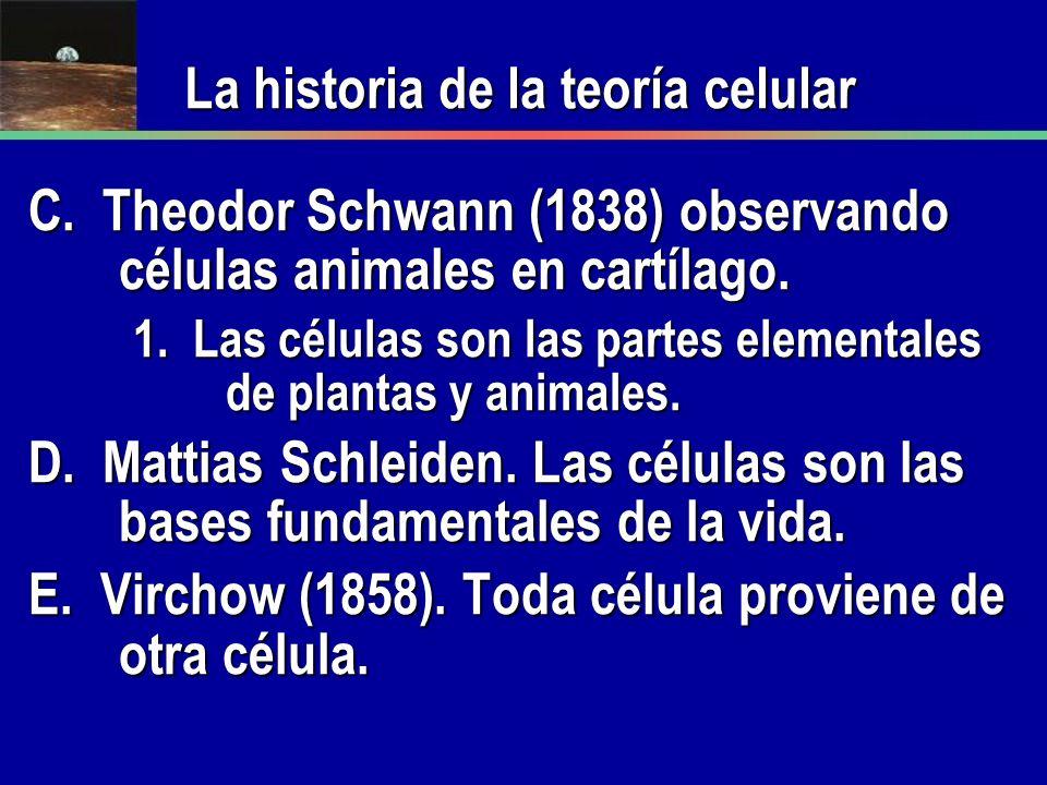 C. Theodor Schwann (1838) observando células animales en cartílago. 1. Las células son las partes elementales de plantas y animales. D. Mattias Schlei