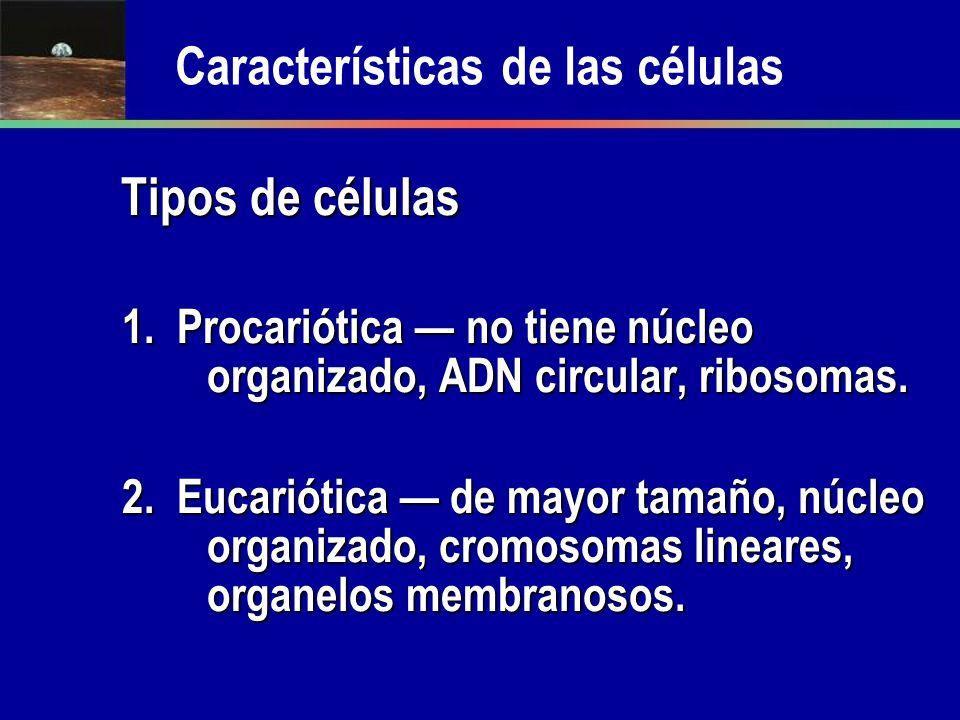 Características de las células Tipos de células Tipos de células 1. Procariótica no tiene núcleo organizado, ADN circular, ribosomas. 2. Eucariótica d