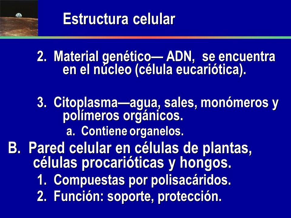 Estructura celular 2. Material genético ADN, se encuentra en el núcleo (célula eucariótica). 3. Citoplasmaagua, sales, monómeros y polímeros orgánicos