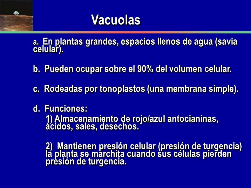 VacuolasVacuolas a. En plantas grandes, espacios llenos de agua (savia celular). b. Pueden ocupar sobre el 90% del volumen celular. c. Rodeadas por to