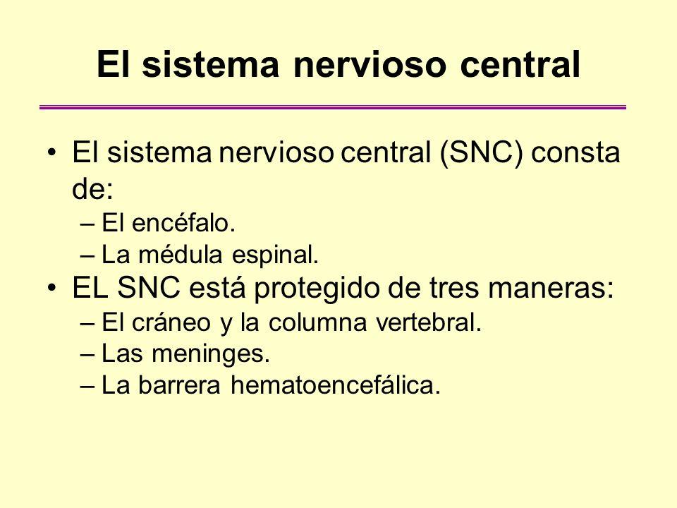 El sistema nervioso central El sistema nervioso central (SNC) consta de: –El encéfalo. –La médula espinal. EL SNC está protegido de tres maneras: –El