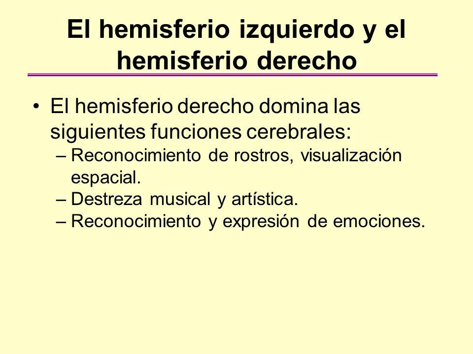 El hemisferio izquierdo y el hemisferio derecho El hemisferio derecho domina las siguientes funciones cerebrales: –Reconocimiento de rostros, visualiz