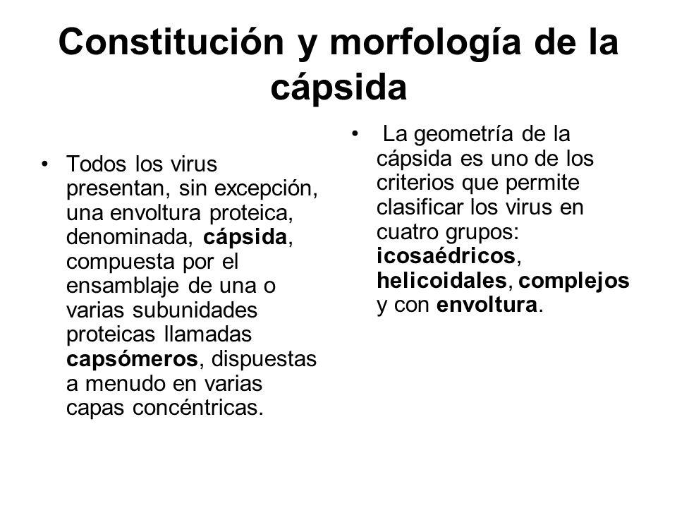 Constitución y morfología de la cápsida Todos los virus presentan, sin excepción, una envoltura proteica, denominada, cápsida, compuesta por el ensamb