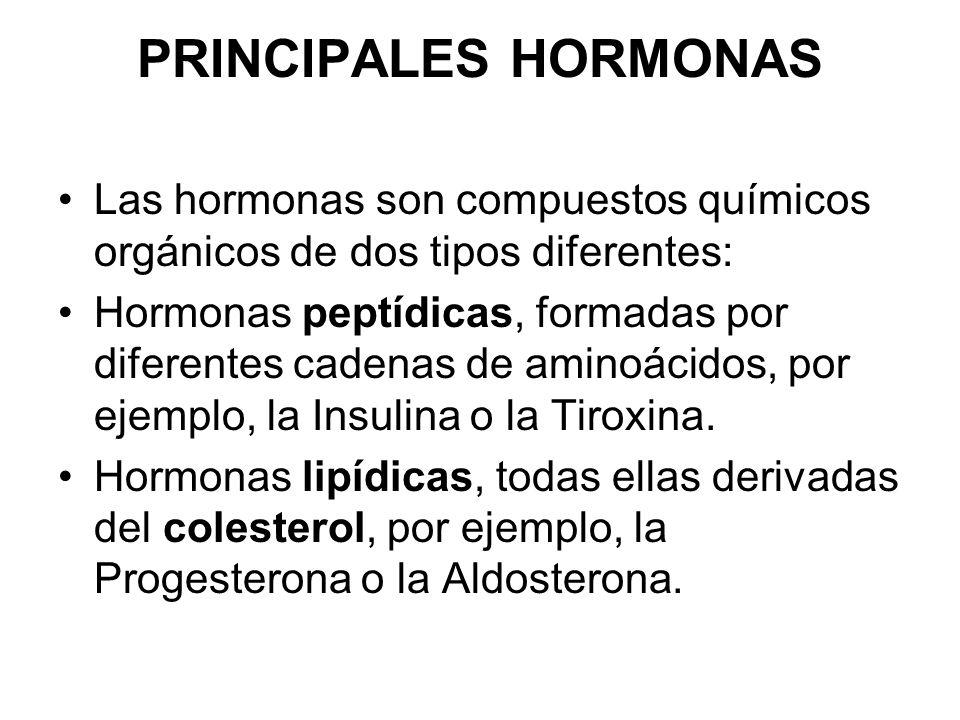 PRINCIPALES HORMONAS Las hormonas son compuestos químicos orgánicos de dos tipos diferentes: Hormonas peptídicas, formadas por diferentes cadenas de aminoácidos, por ejemplo, la Insulina o la Tiroxina.