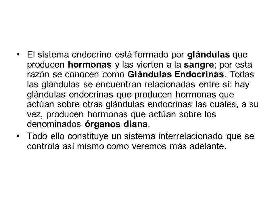 El sistema endocrino está formado por glándulas que producen hormonas y las vierten a la sangre; por esta razón se conocen como Glándulas Endocrinas.