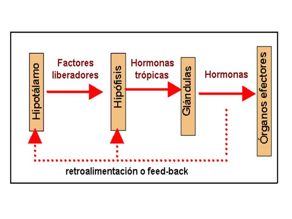 El mecanismo de Producción-Acción-Inhibición se resume en el siguiente esquema: Ante un estímulo, generalmente nervioso o químico, se inicia la producción de una hormona en pequeñas cantidades.