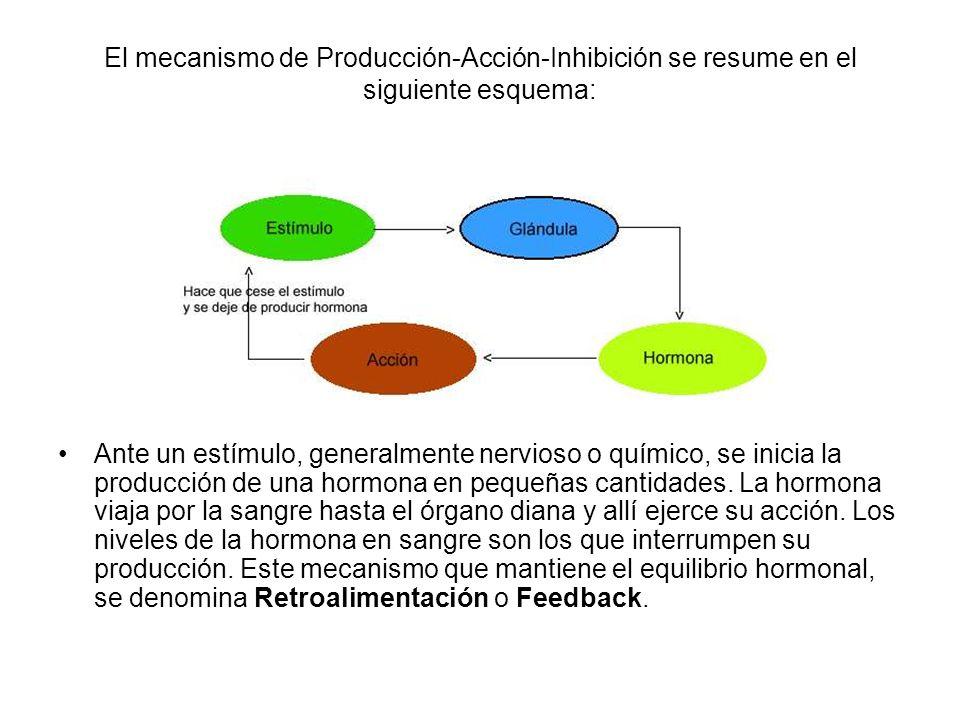 ORGANIZACIÓN En el siguiente dibujo se pueden observar las diferentes glándulas endocrinas y su posición en el cuerpo humano.