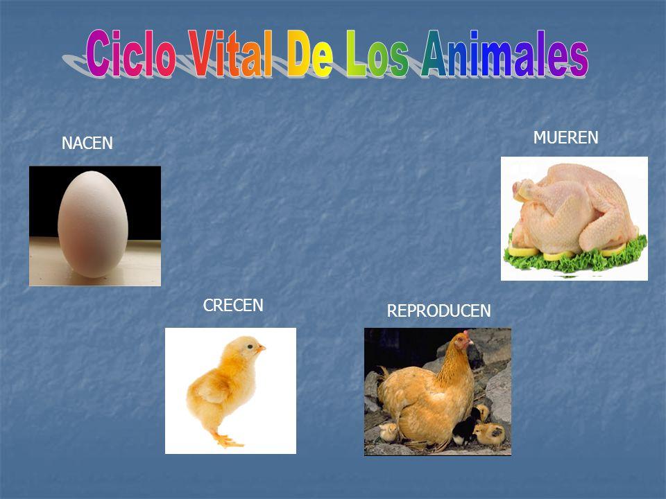 Un animal ovíparo es un animal cuya modalidad de reproducción incluye el deposito de huevos en el medio externo, donde completar su desarrollo antes de la eclosión.