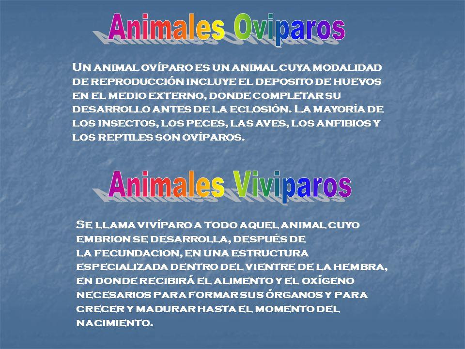 Un animal ovíparo es un animal cuya modalidad de reproducción incluye el deposito de huevos en el medio externo, donde completar su desarrollo antes d