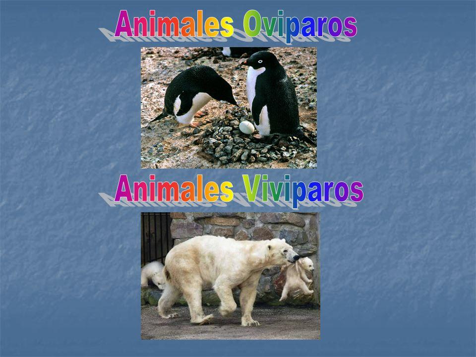 El cuerpo de los animales terrestres está preparado para arrastrarse, caminar, correr, trepar o volar, según el lugar de la tierra en que viven.